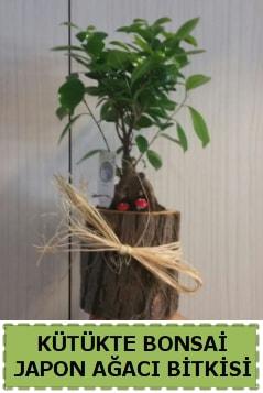 Kütük içerisinde doğal bonsai ağacı  İsparta çiçekçi telefonları