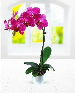 Tek dallı mor orkide  İsparta çiçek satışı
