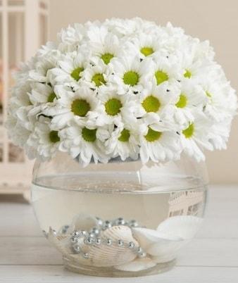 Fanusta beyaz Papatya  İsparta çiçek satışı