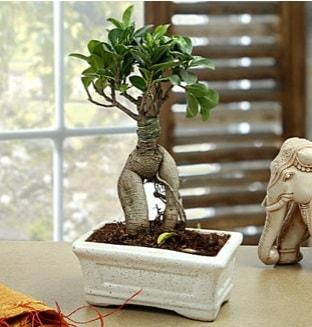 Marvellous Bonsai ginseng  İsparta çiçek siparişi sitesi