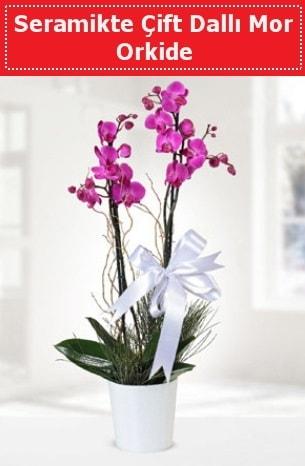 Seramikte Çift Dallı Mor Orkide  İsparta anneler günü çiçek yolla