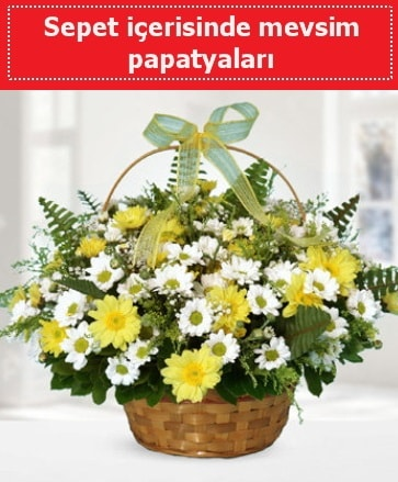 Sepet içerisinde mevsim papatyaları  İsparta ucuz çiçek gönder